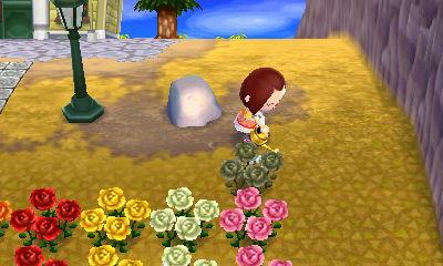 とび森 黒いバラ